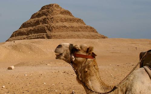 Sakkara Camel