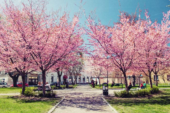 Cherry Sundsvall