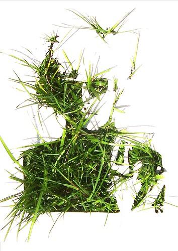 http://farm8.staticflickr.com/7300/8755554250_fbe9d55d0e.jpg