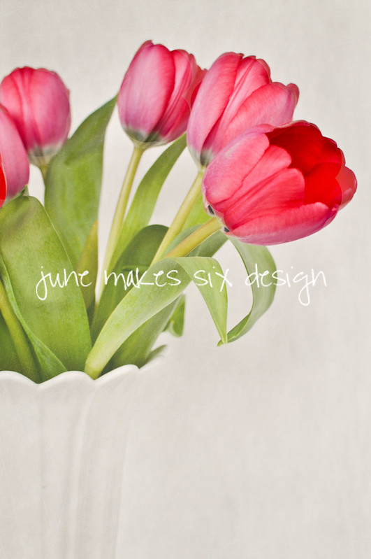 tulips jmsd wm