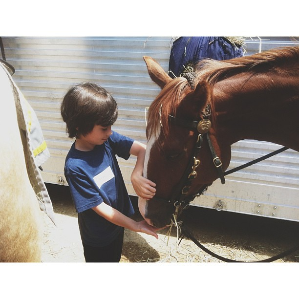 Penn gives his horse, Scout, a treat.