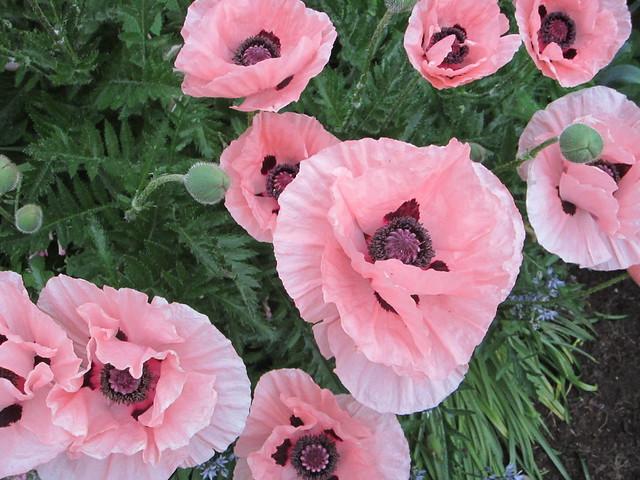 June blooms 2013 (3)