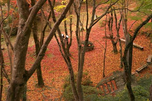 【写真】2012 紅葉 : 笠置山もみじ公園/2020-05-28/IMGP6127