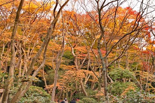 【写真】2012 紅葉 : 祇王寺/2021-09-05/IMGP7865