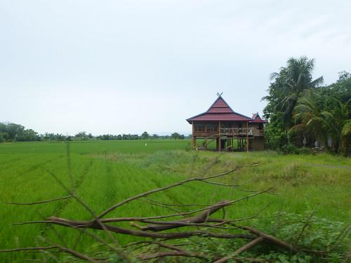 Sulawesi13-Sengkang-Pare Pare (35)