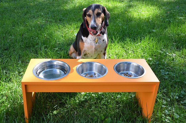 DIY dog feeder