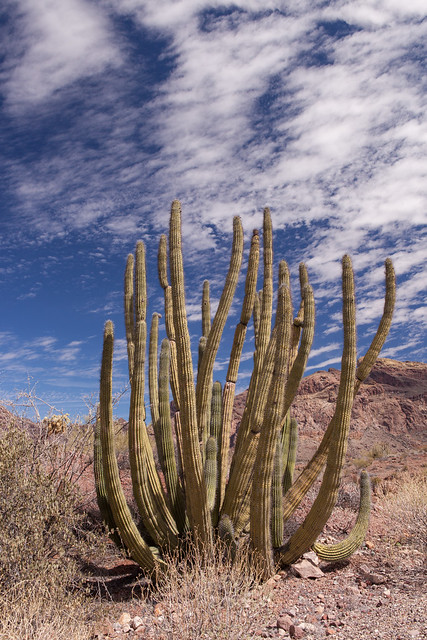 Ajo Mountain Road, Organ Pipe Cactus National Monument