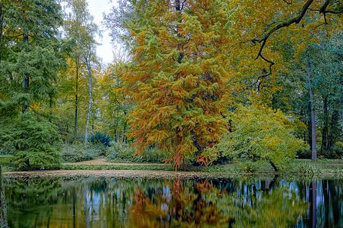 Herbst am Teich