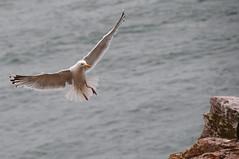 Gull 0813 8434