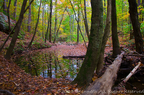 trees fall water forest pond peace mossrocknaturepreserve