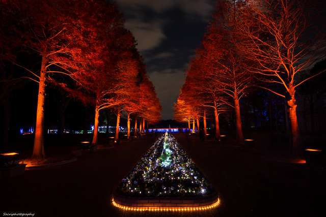 Garden illumination in Nagai #04