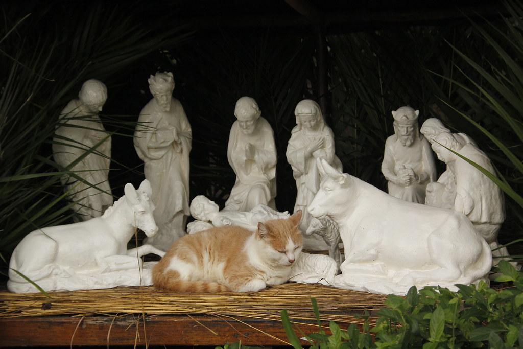 A cat in the Nativity scene.