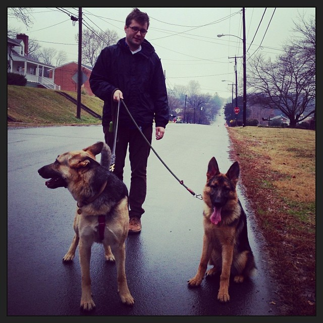 Rainy walk with the new foster puppy! #probablykeepingher #gsd #puppylove
