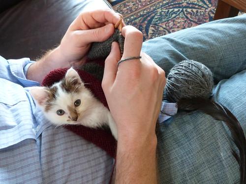 Knittin Kittin