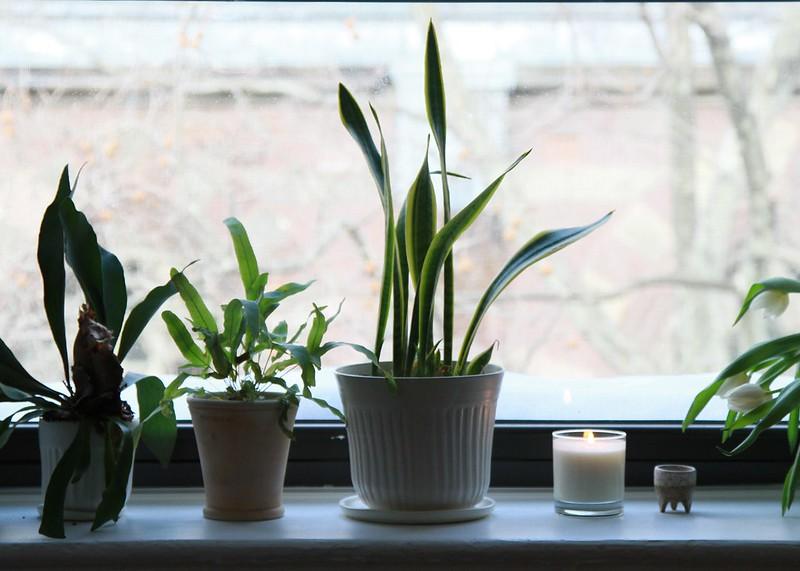 plantsill5461