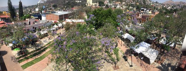 Tianguis Pochote Xochimilco @ Oaxaca 04.2014