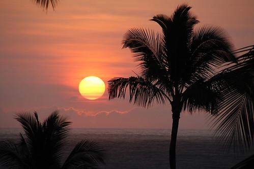 sun sunrise hawaii palm kauai