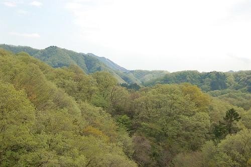 森の風景1