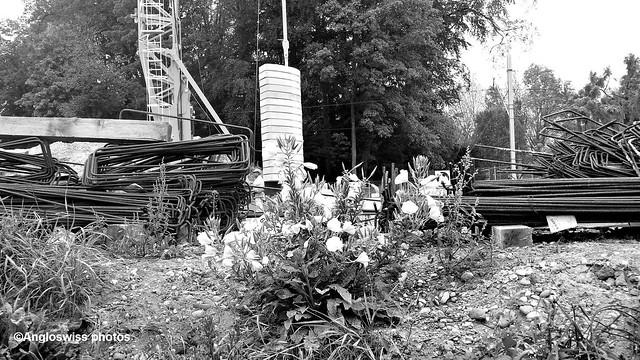 Flowers on the Building Site, Feldbrunnen
