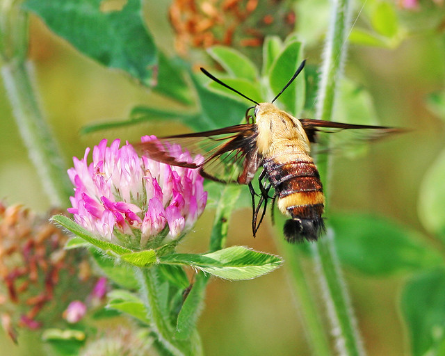 Bugs 20d _1529