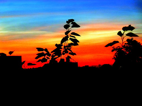 sunset newyork brooklyn image dmitriyfomenko sum22014