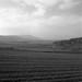 201412_Israel_MF12_TriX_Hasselblad_001-Edit.jpg by ijontichy69