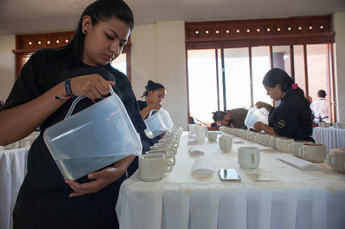 Preparation for cupping on the 1st day of competition