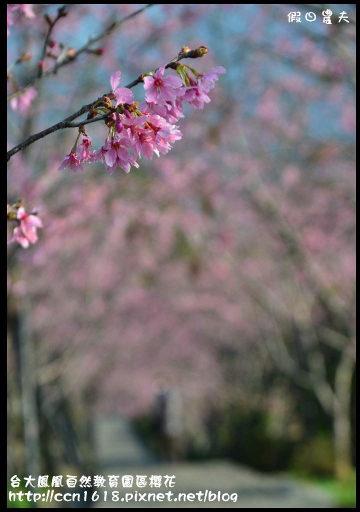台大鳳凰自然教育園區櫻花DSC_5964