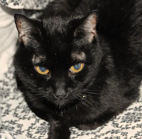 Penelope, pet, photography