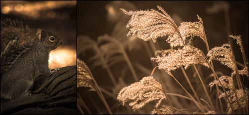The Botanical Gardens, Sheffield // 08 02 15