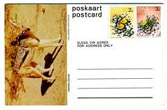 1980-06-18 SWA Postcard Jackal - Unsent (1200)