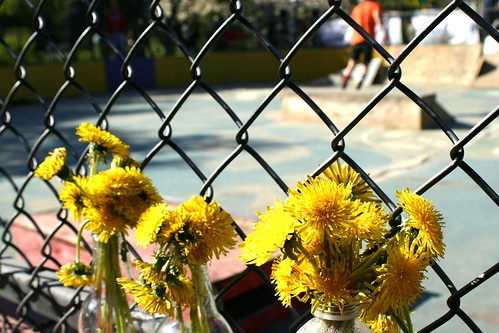 Dandelions at the skatepark