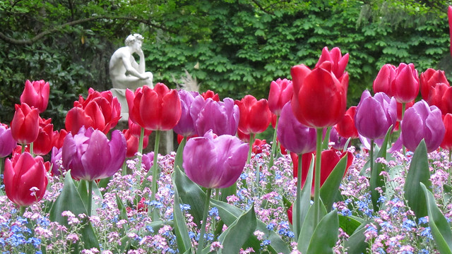 Tulips in Luxembourg Gardens