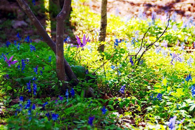 春の妖精3
