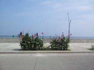 Зображення Promenade beach. india mobile