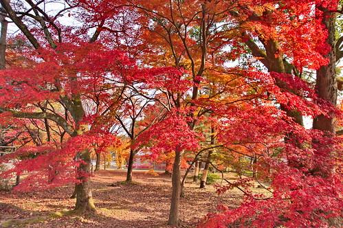 【写真】2012 紅葉 : 清凉寺/2020-09-21/IMGP7823