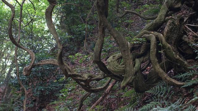Nature_Road_05a