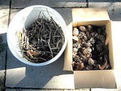 ecozoom biomass (1)