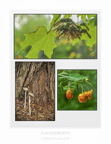 Signs of fall Trilogy by Alan Norsworthy