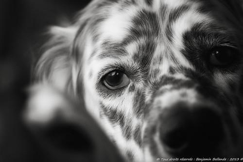 Dog Portrait : Fuji S5 pro