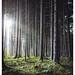 L1004725 / Wald by Gensu