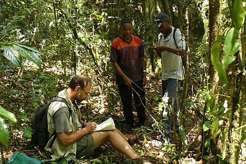 How Google Earth helped find Mozambique's lost forest of Mount ...
