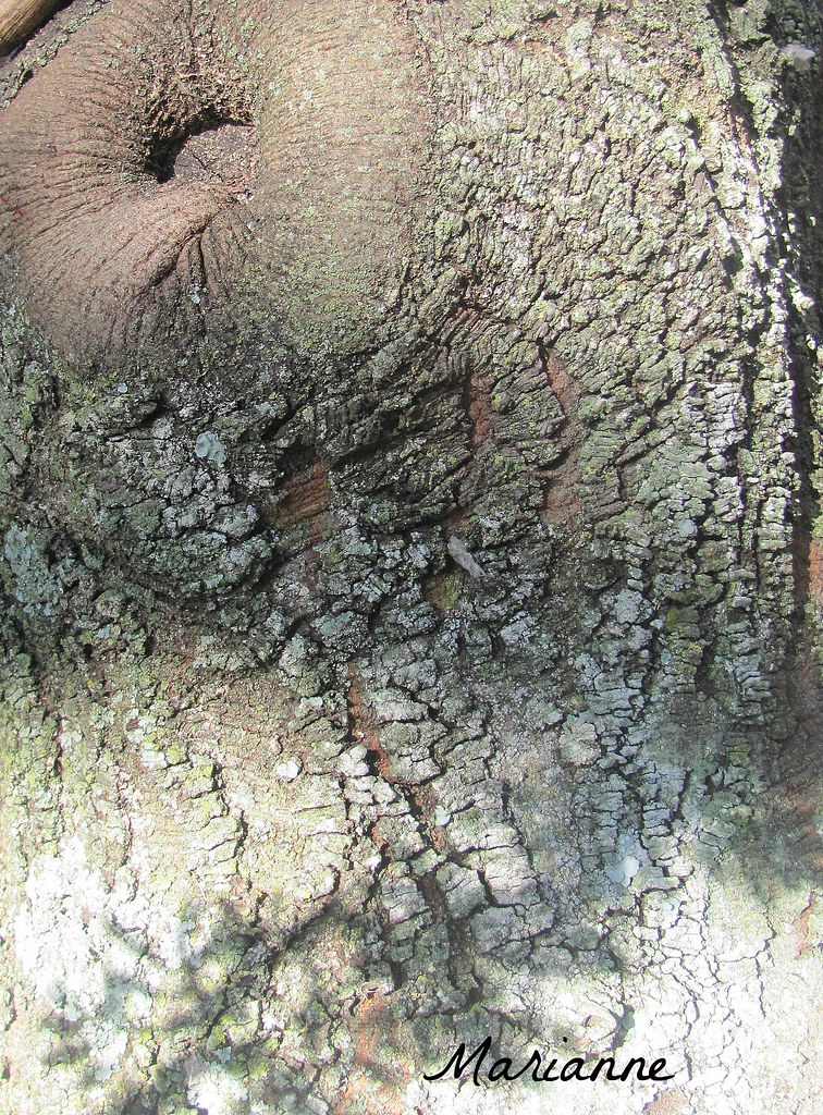 Patterns Tree