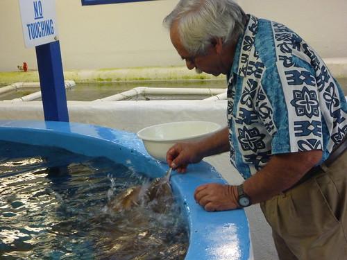 Jack Rudloe feeding Nurse Sharks at Gulf Specimen Marine Lab