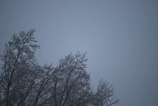 ice tree sky