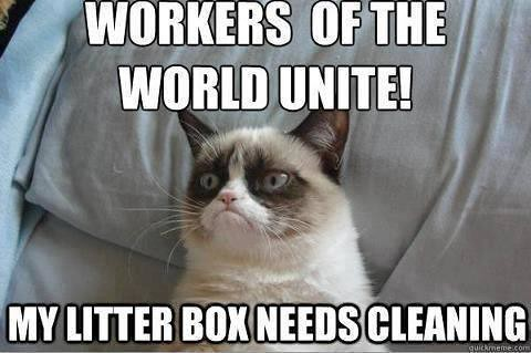 Workers unite for grumpy cat
