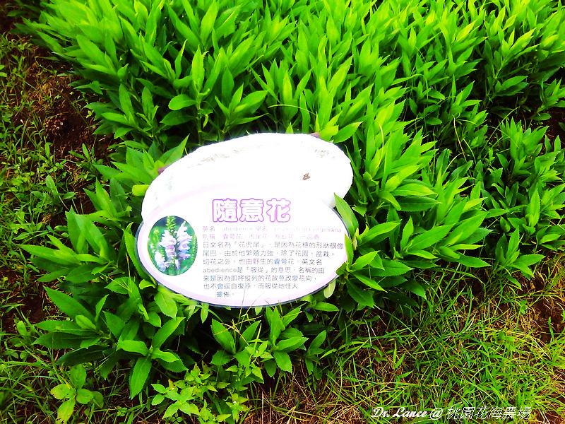 nEO_IMG_2012-05-27 17.19.50