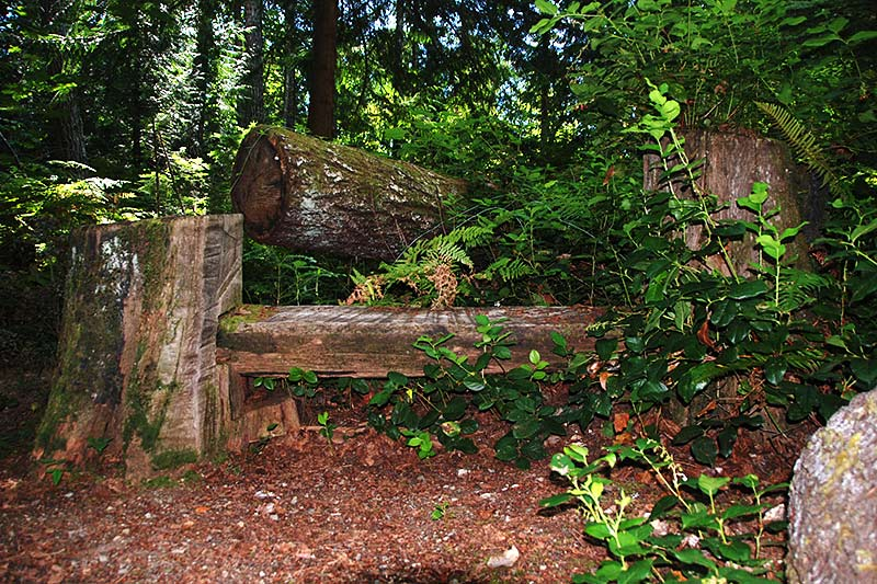Bench on Nymph Falls Trail, Courtenay, Vancouver Island, British Columbia