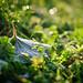 Frosty leaf by Ricketty_B