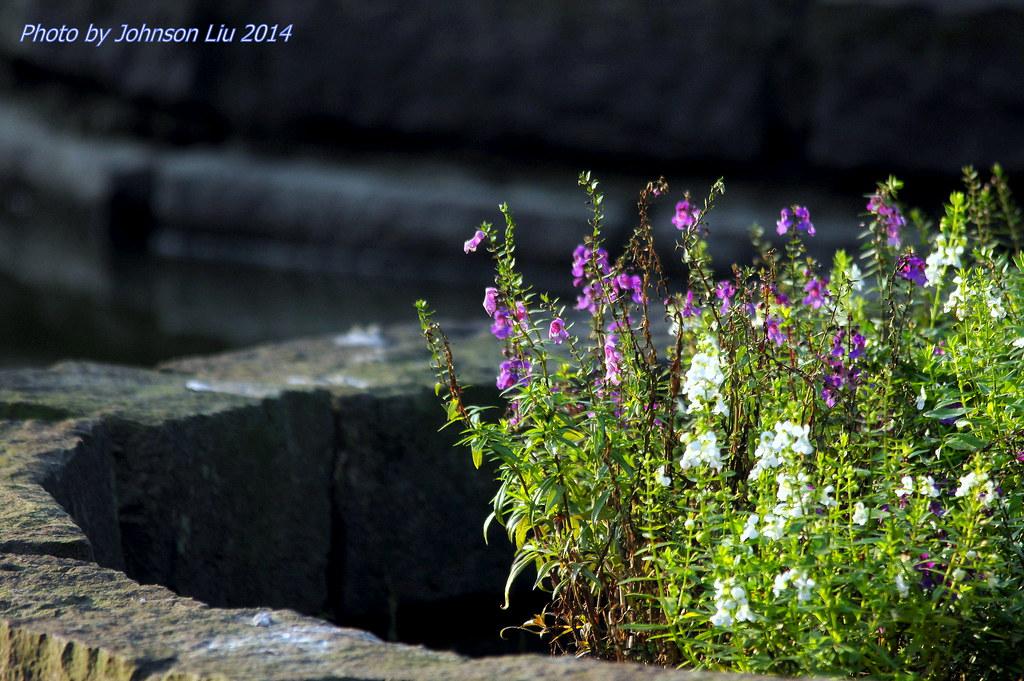 台北植物園 花與鳥